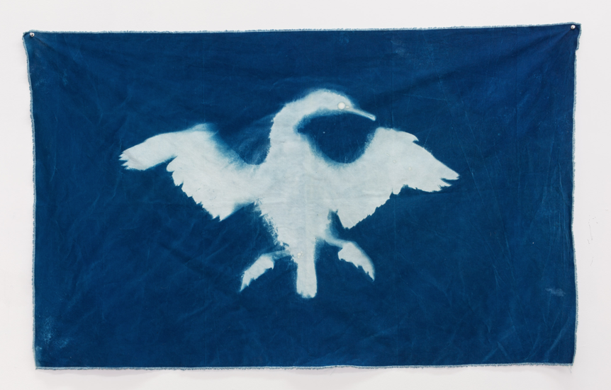 "Christy Gast ""Cormorant I (Straight of Magellan)"" 2014 cyanotype on canvas"