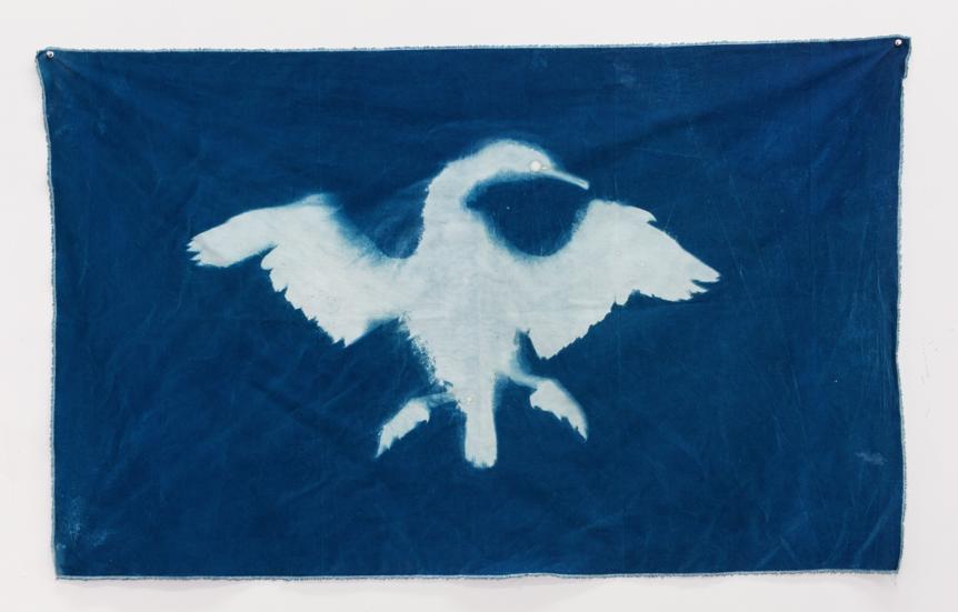 "Christy Gast ""Cormorant I (Straight of Magellan)"" 2014 cyanotype on canvas"