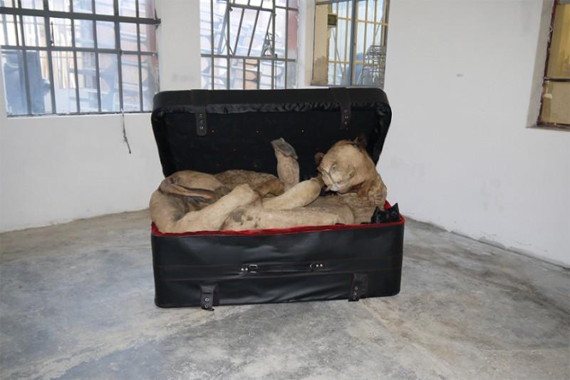 IRAN:  Huma Mulji shows travelers how to successfully smuggle a mummified camel through airport security.