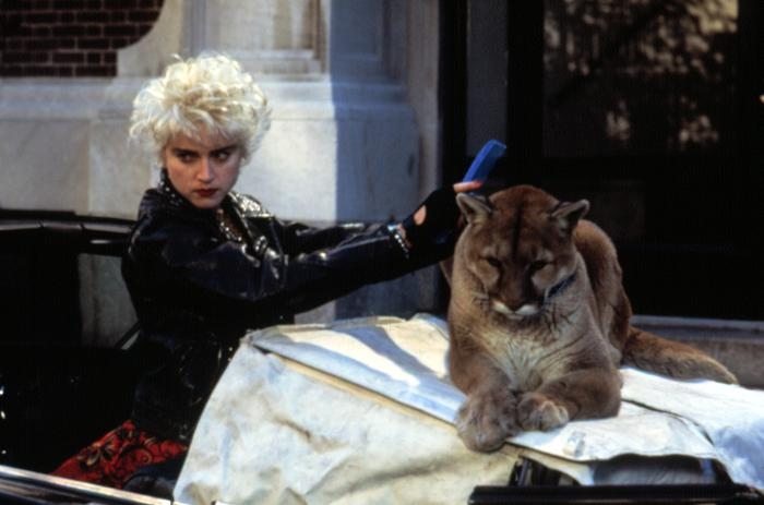 "Madonna is seen here combing her kittens hair back in 1987.  It was this cat that inspired her hit single, ""Like a Purrin""."