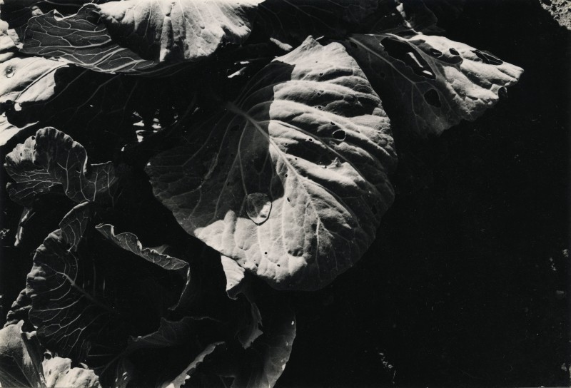 "Jay DeFeo. ""Untitled,"" 1972. Gelatin silver print. 4 3/8 x 6 1/2 inches, 14 3/4 x 15 3/4 inches framed. Courtesy of Hosfelt Gallery"