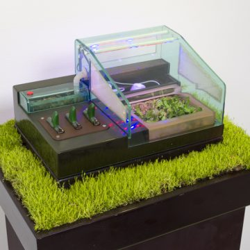 Carl Cheng, Supply & Demand, 1972. Venus flytrap, insects, plastic case, humidifier, wiring, grass, wood pedestal, grow lamps, 47 x 24 x 18.6 inches. Courtesy of Cherry and Martin. Nature Is Everything, a solo exhibition by Cheng, is on view at Cherry and Martin through July 30.